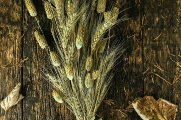 Wheat Bundle Grain-Free Celiac Disease Gluten-Free